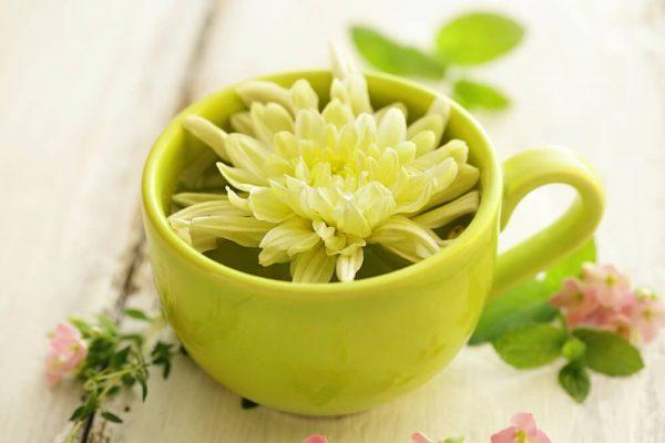 Blooming flower in a teacup