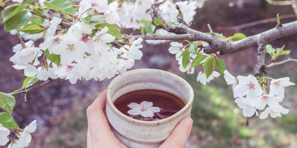 Female Hand Holding Teacup Of Cherry Blossom Tea