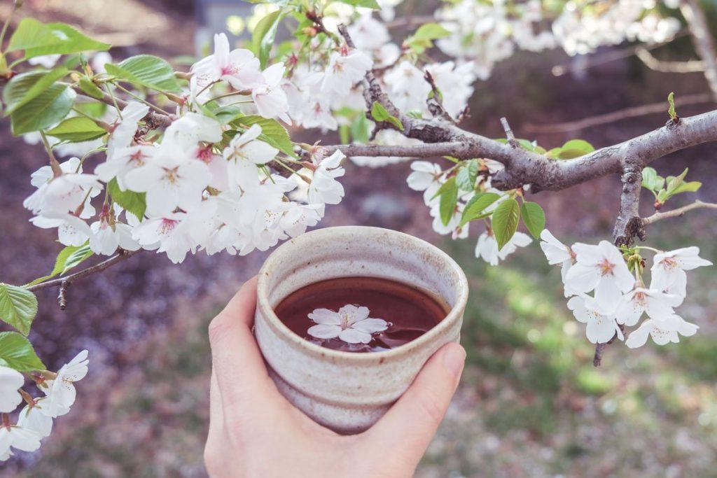 Female Hand Holding Teacup Of Cherry Blossom Tea
