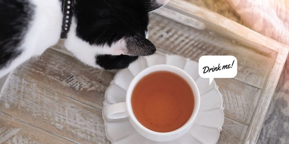"Cat looking at a cup of tea on a wooden tray. Caption ""Drink me!"""