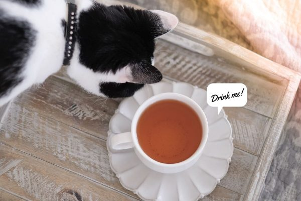 Cat next to a cup of tea