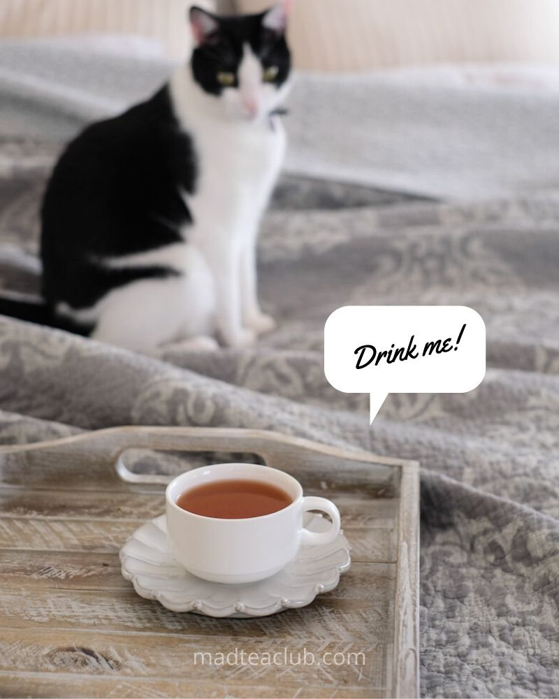 Cat looks at a cup of tea with caption: Drink me!